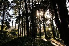 Leafy forest with colossal trees in Sintra Mountains. Beautiful leafy forest with colossal trees and soft sun rays in Sintra Mountains in Lisbon, Portugal wood stock photography