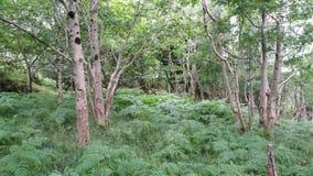 Leafy forest Stock Photos
