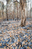 Leafy forest after fire Stock Images