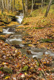 Leafy Forest Stream Stock Image
