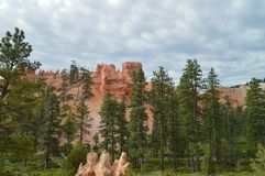 Free Leafy Forests Of Pines And Firs In Bryce Canyon Formations Of Hodes. Geology. Royalty Free Stock Photography - 107758787