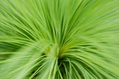 Leafy grass Stock Image