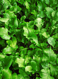 Leafy green background Stock Images