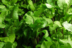 Leafy green background Stock Photo