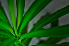 Leafy green indoor plant awaiting summer royalty free stock images