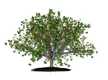 Leafy green oak tree. Realistic 3d illustration of green leaved oak tree changing to autumn with falling leaves; isolated on white background Royalty Free Stock Photos