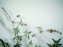 Leafy green plants Stock Photo