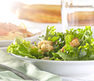 Leafy green salad with croutons Stock Image