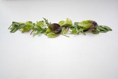 Leafy green salad ingredients arranged in a straight line Royalty Free Stock Photo