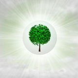 Leafy green tree in glossy bubble in the air with flare Royalty Free Stock Image