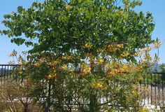 Leafy Green Tree Next to a Red and Yellow Flowering Plant royalty free stock images