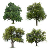 Leafy green trees. Set of four leafy green trees isolated on white background royalty free stock photography