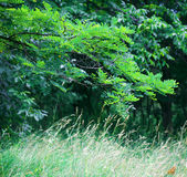 Leafy green trees. Scenic view of leafy green trees and grass in countryside royalty free stock photos