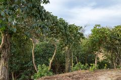 Leafy green trees at the edge of a clearing Royalty Free Stock Images
