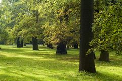 Leafy green trees in park. Scenic view of leafy green trees in summery park royalty free stock photo
