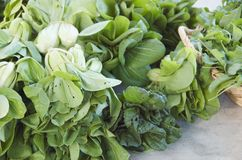 Leafy green vegetables. Fresh bok choy and other leafy greens at a local organic market royalty free stock images