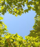 Leafy Heart. Leaves of two trees converge to form an image of a heart Royalty Free Stock Photography