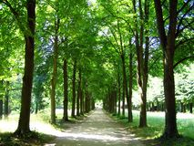 Leafy Lane Royalty Free Stock Photos