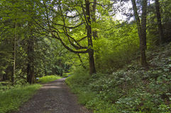Leafy Lane Stock Photography
