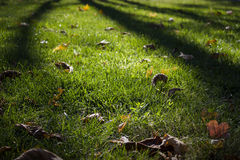 Leafy Lawn Royalty Free Stock Image