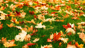 Leafy Lawn Royalty Free Stock Images