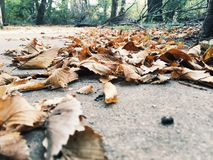 Leafy. Leaves on ground royalty free stock images