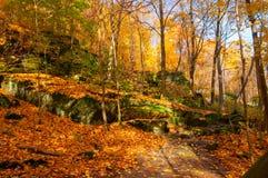 Leafy ledges Stock Image
