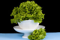 Leafy Lettuce Stock Photos