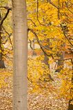 Leafy park in autumn. Scenic view of leafy golden trees in autumnal park Royalty Free Stock Image