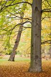 Leafy park in autumn. Scenic view of leafy tree in autumnal park Stock Photos