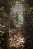 Leafy passageway Royalty Free Stock Photography