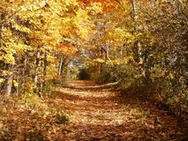 Leafy path royalty free stock image