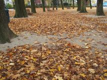 Leafy path in Autumn. Brussels park leafy Stock Photo