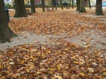 Leafy path in Autumn Stock Photo