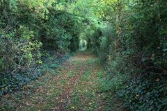 Leafy path in autumn. Wooded trail covered with leaves in autumn Stock Image