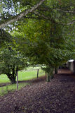 Leafy path by the rock of Cashel Stock Photography