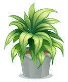 A leafy plant Stock Image