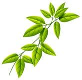 A leafy plant Stock Photo