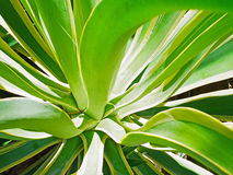 Leafy plant Stock Photos