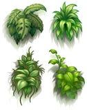 Leafy plants Stock Photo
