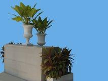 Leafy plants Stock Photography