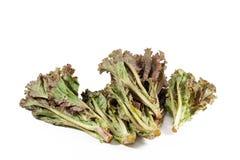 Leafy purple lettuce Royalty Free Stock Photo