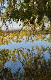 Leafy reflection royalty free stock photo
