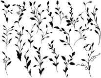 Leafy Scroll Design Ornaments Royalty Free Stock Image
