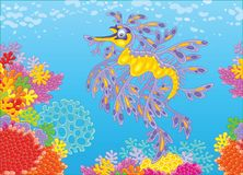 Leafy sea dragon on a coral reef. An exotic sea horse seadragon swimming in blue water over colorful corals in a tropical sea, a vector illustration in cartoon Royalty Free Stock Images