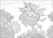 Leafy sea dragon on a coral reef. An exotic sea horse seadragon swimming over corals in a tropical sea, a black and white vector illustration in cartoon style Stock Image