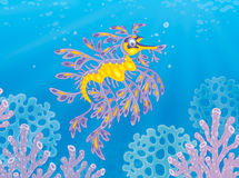 Leafy sea dragon. Illustration of an exotic sea horse seadragon swimming among corals on a tropical reef Royalty Free Stock Image