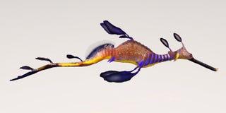 Leafy Seadragon Stock Image
