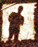 Leafy shadow stock photography