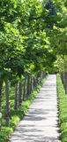 Leafy Sidewalk Stock Photography